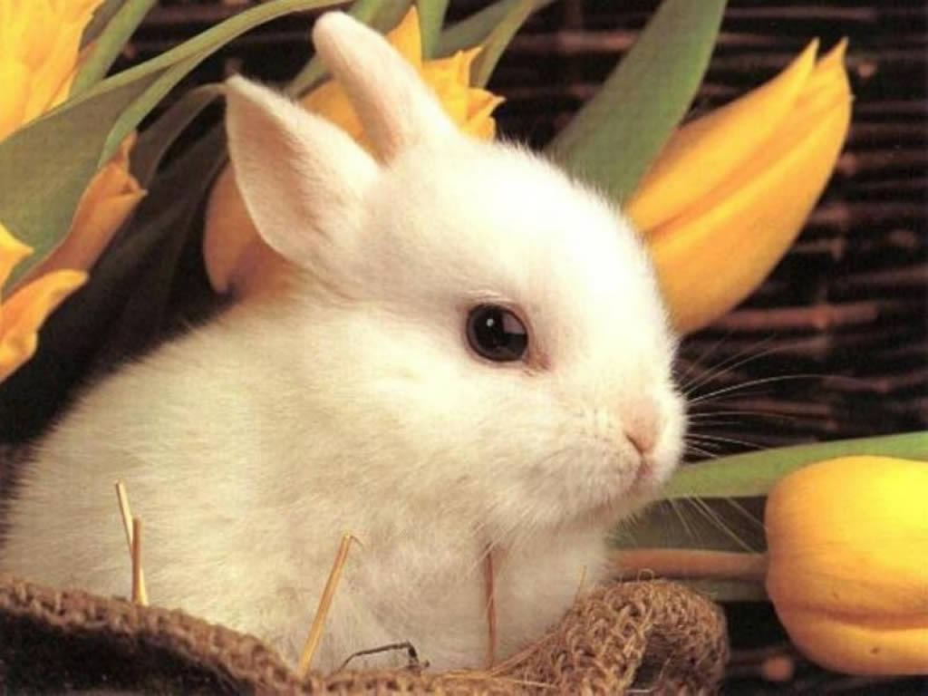 What does a rabbit have to do with Easter? Photo Credit: fanpop.com